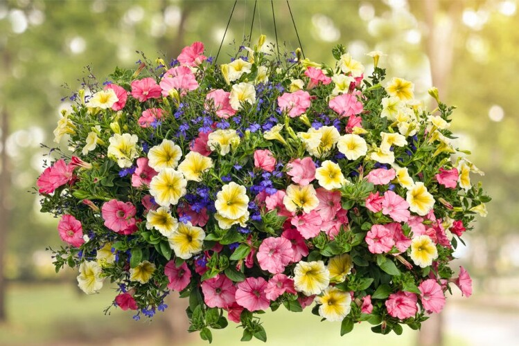 Outdoor Hanging Baskets from Richardson's Flowers in Medford, NJ