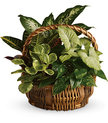 Emerald Garden Basket from Richardson's Flowers in Medford, NJ