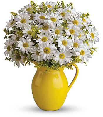 Teleflora's Sunny Day Pitcher of Daisies from Richardson's Flowers in Medford, NJ